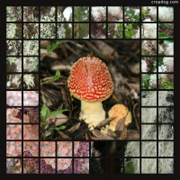 Photo Collage Mushroom