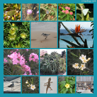 Photo Collage Some Of Lanzarote's Flora And Fauna