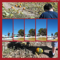 Photo Collage Marana Pumpkin Patch P1