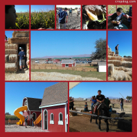 Photo Collage Marana Pumpkin Patch P2