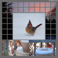Photo Collage Winter Birds