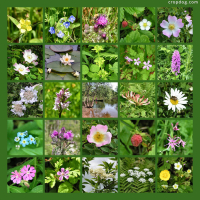 Photo Collage Wild Flowers Everywhere