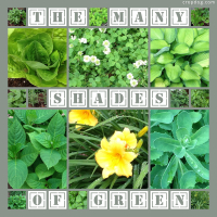 Photo Collage The Many Shades Of Green