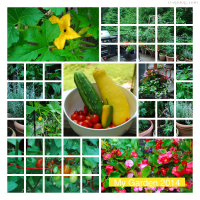Photo Collage Summer Garden 2014