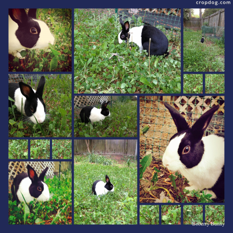 Photo Collage Boberry Bunny